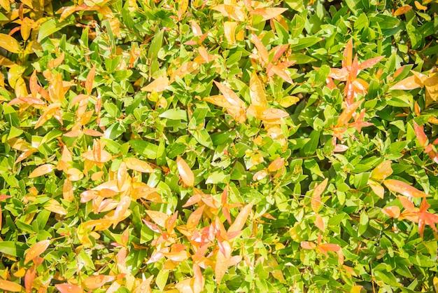 緑の葉のパターン