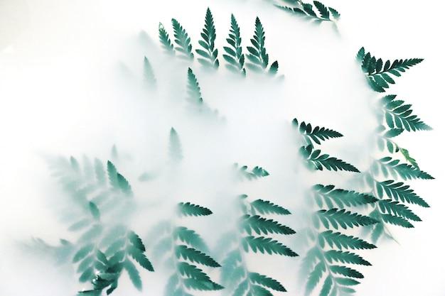 흰 연기로 덮여 녹색 잎 식물