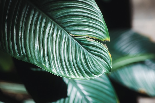 緑の葉の植物をクローズアップ