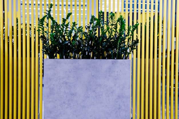 スタイリッシュなリビングルームのインテリアのための緑の葉の鉢植えの植物。カールとモンステラ植物の背景の家の植物の葉。内部に成長ゾーンを残します。ホームスペースの緑化の背景概念