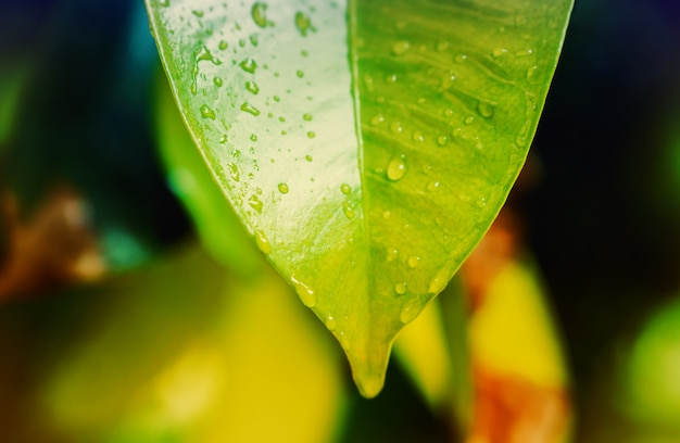 Surise 봄 자연 바탕 화면 배경에서 녹색 잎 텍스처