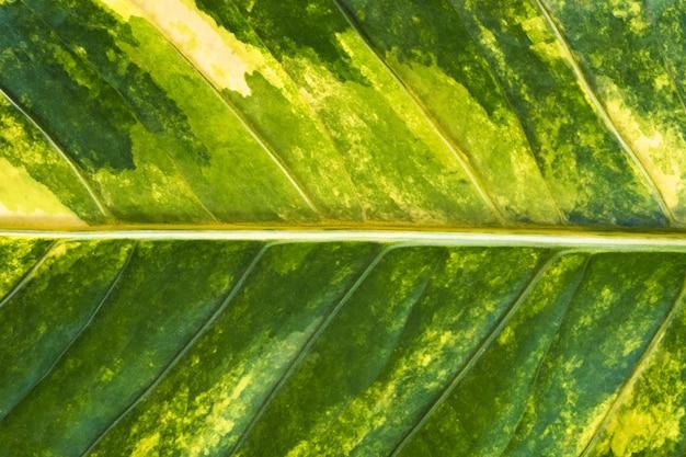 自然の緑の葉のテクスチャ背景