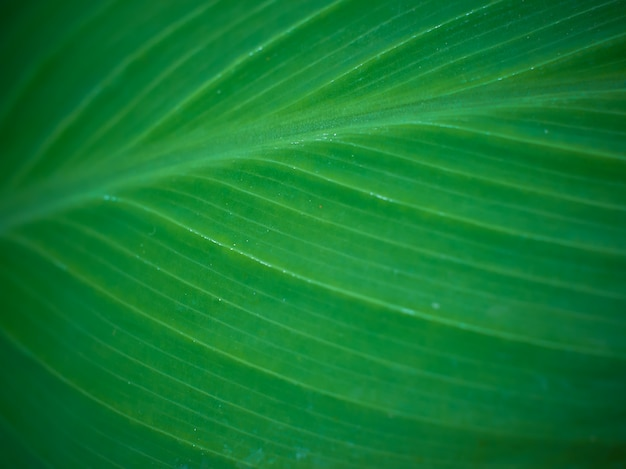 Green leaf texture background with macro view