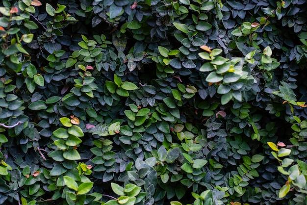 Green leaf texture background
