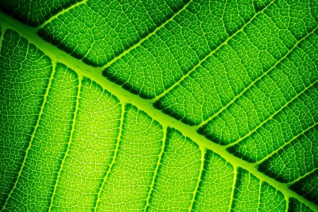 緑の葉のテクスチャをクローズアップ