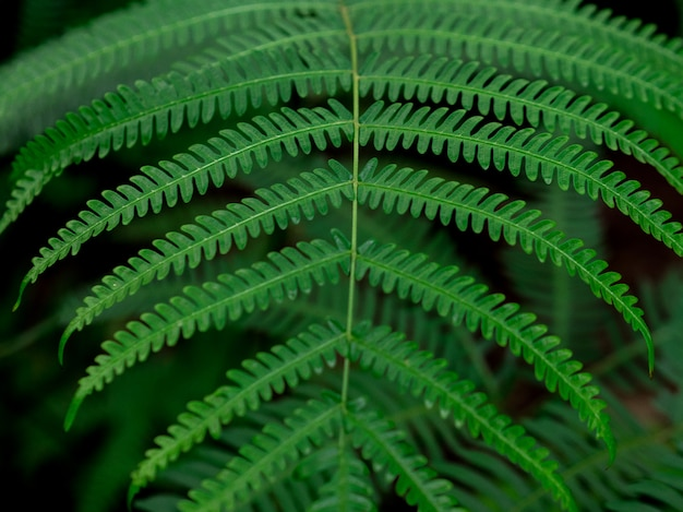 Green leaf texture. green nature background.