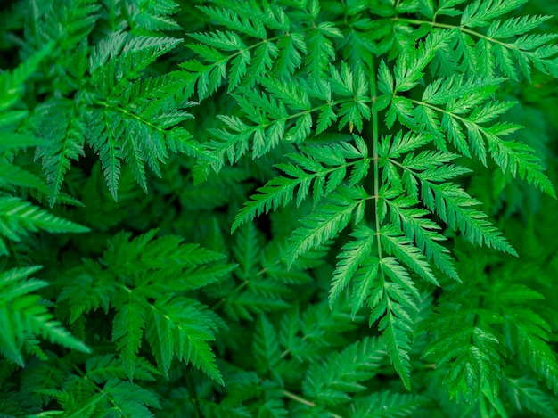 Green leaf texture / leaf texture background / copy space. summer concept.