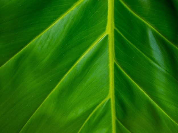 Green leaf texture. leaf texture background. copy space
