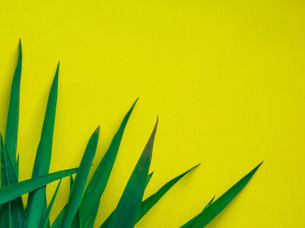 Green leaf texture / leaf texture background / copy space.