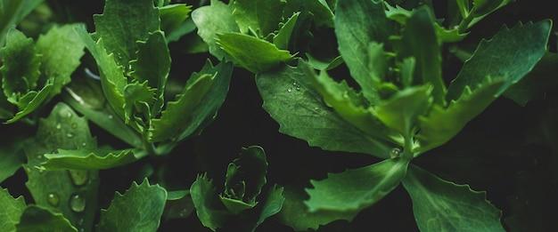 緑の葉のテクスチャー。葉のテクスチャ背景。