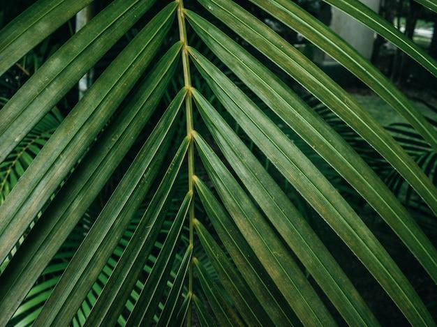 Green leaf texture / leaf texture background