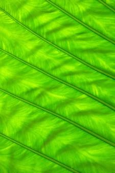 Текстура зеленых листьев растения крупным планом
