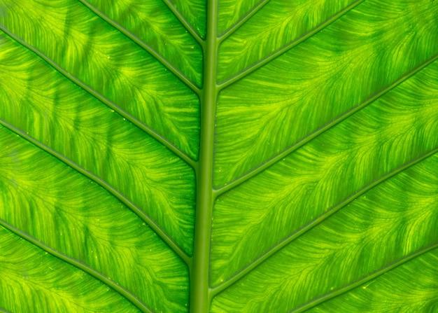 식물의 녹색 잎 텍스처를 닫습니다.