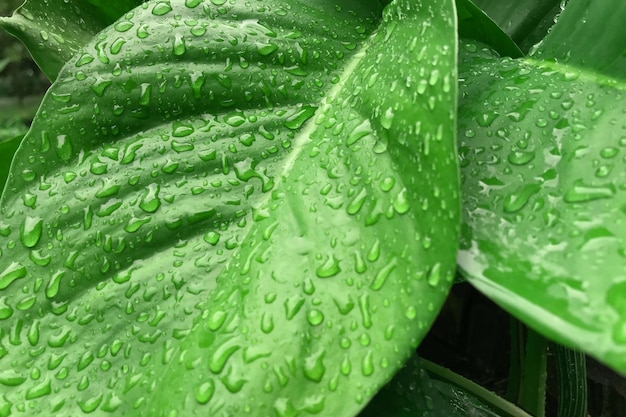 Green leaf texture with drops of water