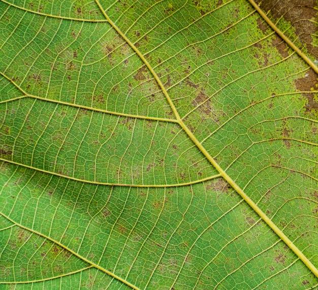 Текстура зеленого листа