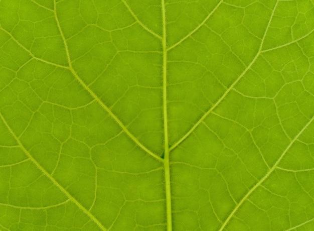 녹색 잎 텍스처
