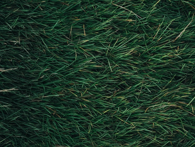 Текстура зеленых листьев