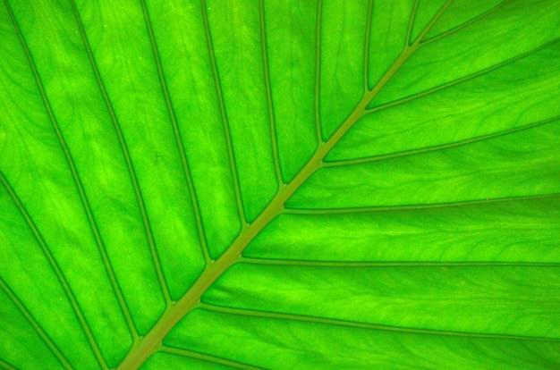 緑の葉のテクスチャ