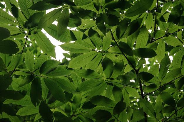 澄んだ空の暗に下から撮影された緑の葉のテクスチャ背景