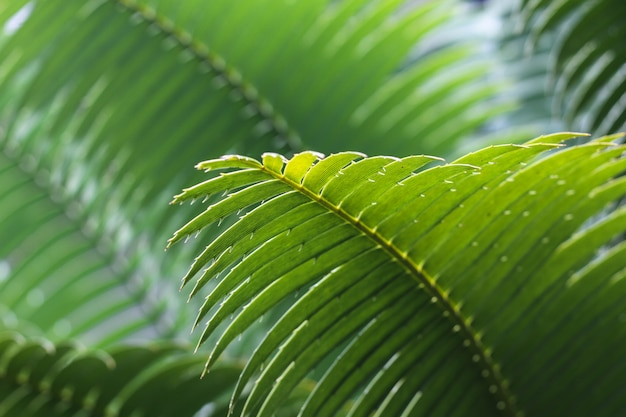 Green leaf of a tropical plant