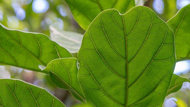 緑の葉の静脈のテクスチャ