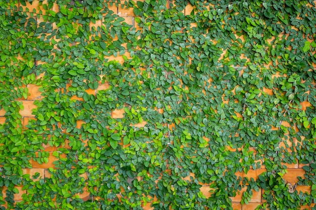 Green leaf and wall background and texture