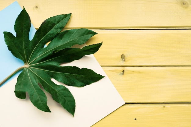 Green leaf on white and paper background over the yellow wooden table