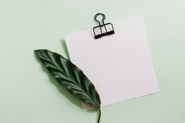 Green leaf on white paper with black paperclip against pastel background
