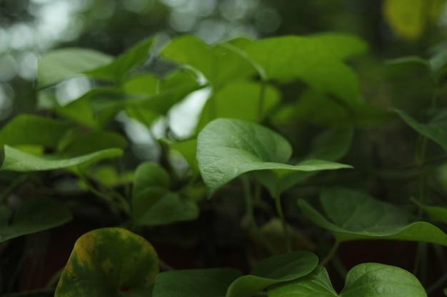 Green leaf in winter