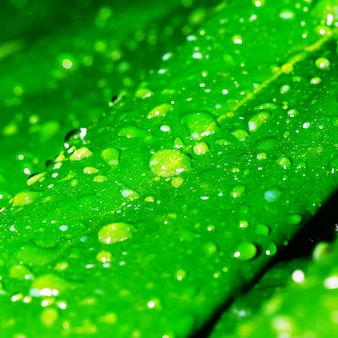 Green leaf with dew drops, spring  background