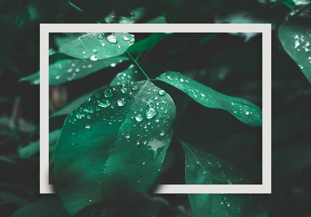 Green leaf with dew and white frame on dark nature background.