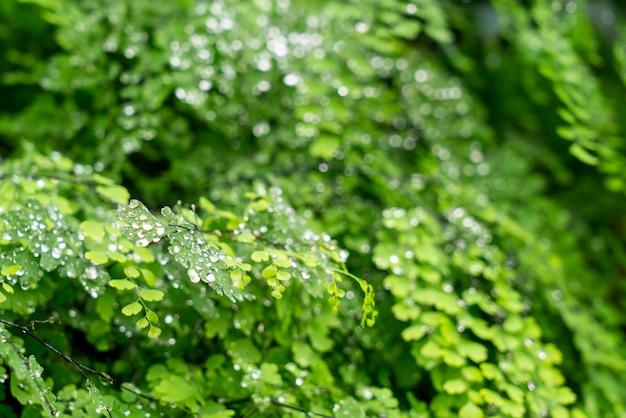 물 또는 물방울 방울과 녹색 잎