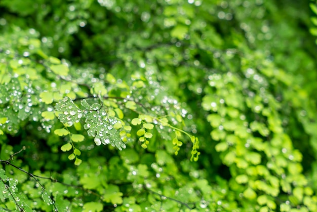 Green leaf with drops of water or water droplets