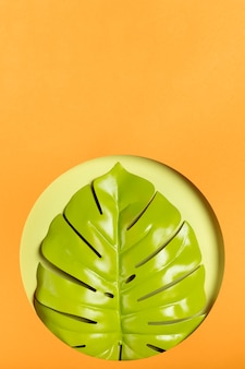 Green leaf with orange background and copy space