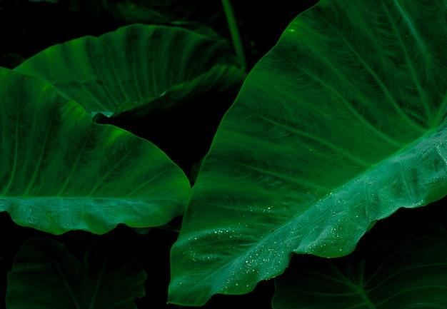 ジャングルの中で雨のしずくと緑の葉。葉に水滴。最小限のパターンで緑の葉のテクスチャ背景。暗い背景に熱帯林の緑の葉。緑の壁紙。植物園。