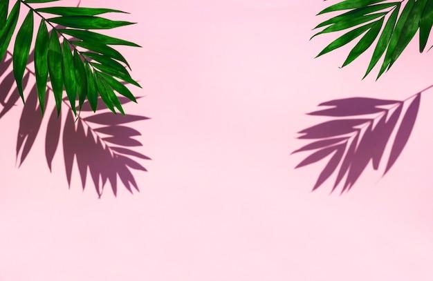 Зеленый лист с тенью на розовом фоне