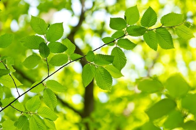 Зеленый лист с каплей воды на черном фоне