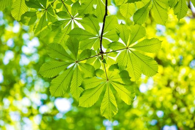 黒の背景に水滴と緑の葉