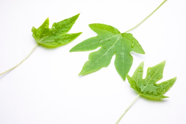 Green leaf with water droplets,closeup on white background