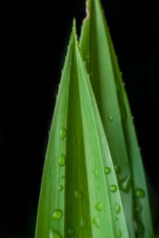 水滴の背景と緑の葉