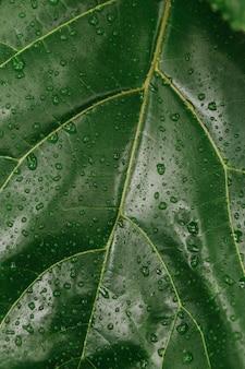 녹색 잎 식물