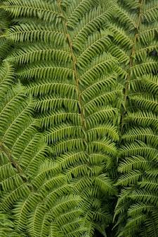 緑の葉の植物