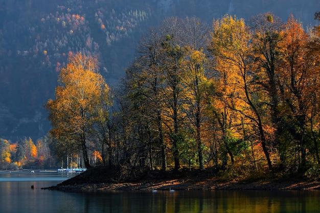 水域近くの緑の葉の木