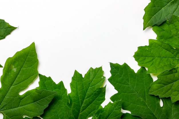 Green leafs frame abstract background