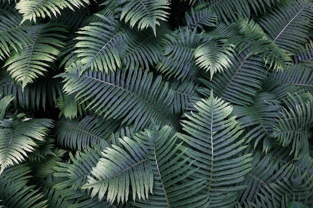 녹색 열 대에 빗방울이와 화분의 잎. 평면도. 평평하다. 자연 배경, 은방울꽃과 고사리 잎의 근접.