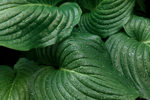 熱帯の雨滴とシダの緑の葉。上面図。フラットレイ。自然の背景、スズランとシダの葉のクローズアップ。