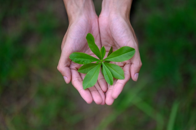Green leafy seedlings put on the hands of men