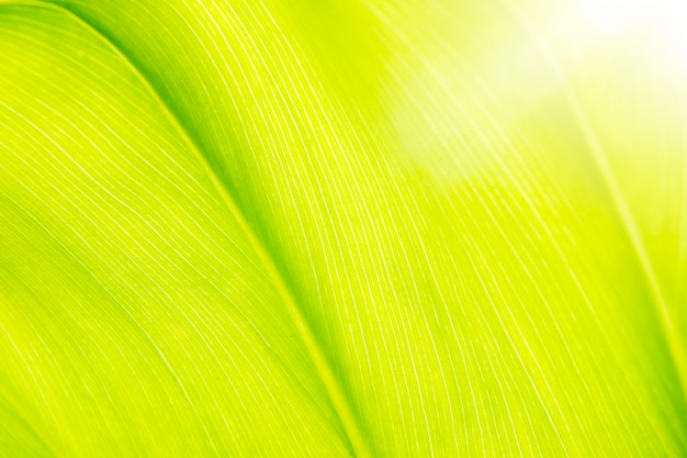 Green leave background with sun light