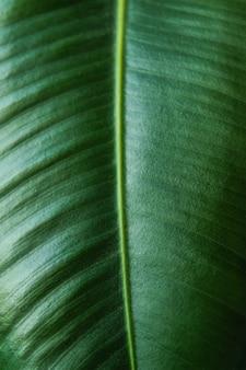 Зеленые листья крупным планом текстуры для ботанического тропического летнего фона