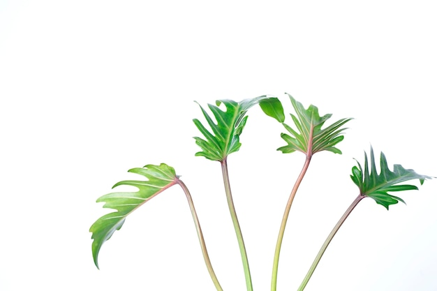 Зеленый лист, изолированные на белом фоне